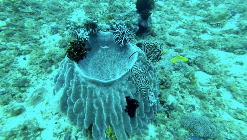 Co by na pevnině mohlo být barevné, pod vodou vidíme zkrátka jinak.